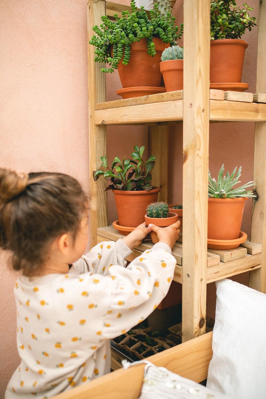 estantería cactus