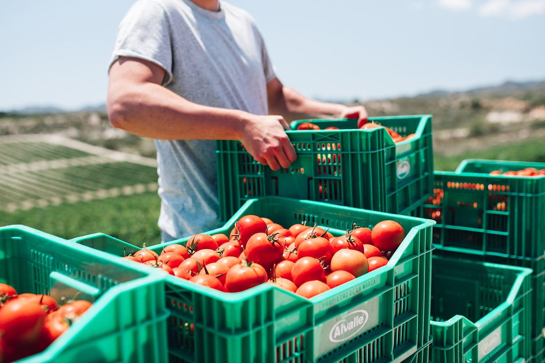 tomates Alvalle